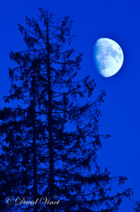 Forest and moon
