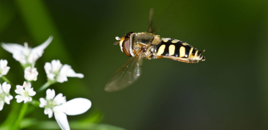 Flying, walking or crawlingInsects